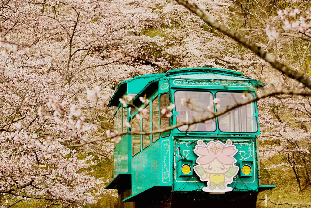 船岡城址公園の桜とケーブルカー