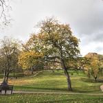 Trees at Winckley Square, Preston