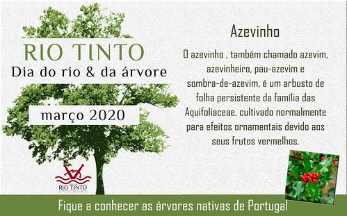 02 Azevinho