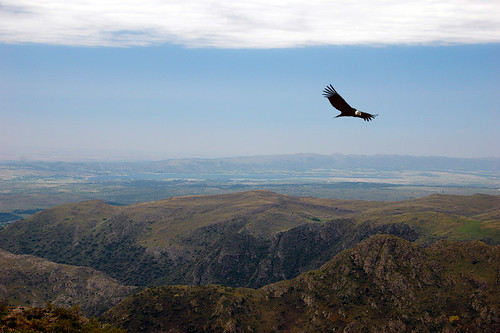 A condor soars over the he Quebrada del Condorito, a National Park near Cordoba in Argentina