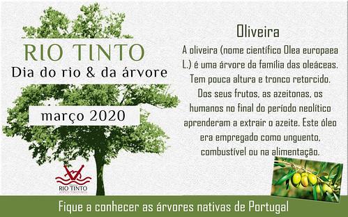 14 Oliveira