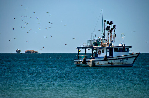 A fishing boat being followed by tons of seagulls off of the beach of Playa Blanca in Costa Rica