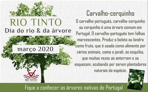 05 Carvalho-cerquinho