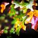 "<p><a href=""https://www.flickr.com/people/ejnelson25/"">E. Nelson</a> posted a photo:</p>  <p><a href=""https://www.flickr.com/photos/ejnelson25/49695098993/"" title=""""><img src=""https://live.staticflickr.com/65535/49695098993_0b614340c9_m.jpg"" width=""240"" height=""156"" alt="""" /></a></p>"
