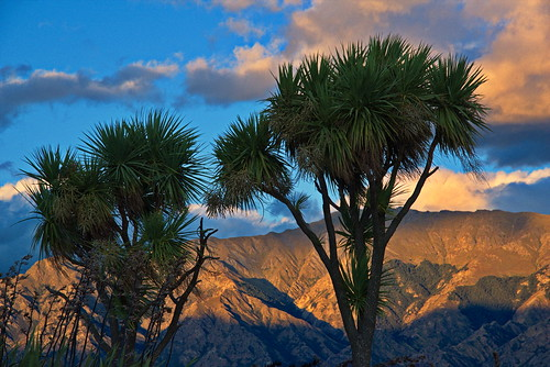 nikond750 newzealand mountains sunset cordyline sky hawea