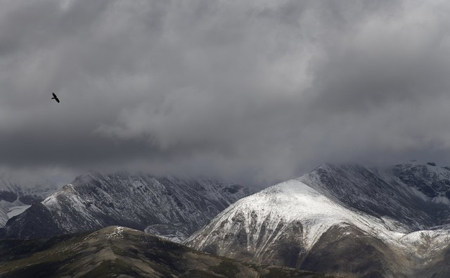 Lammergeier carried by the winds of the Nyenchen Tanglha Mt Range, Tibet 2019