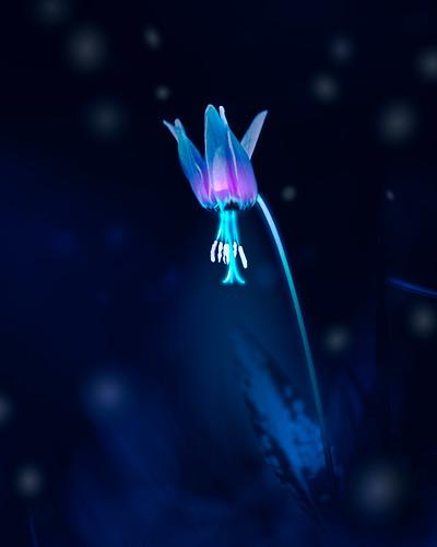 Starlighth flower