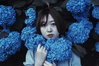 青いアジサイ II