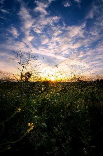 los angeles elysian park wide angle lens sunrise weeds plants sky clouds outdoors tokina nikon d7000 la wildflowers