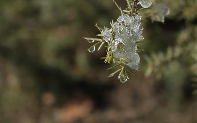 dégel