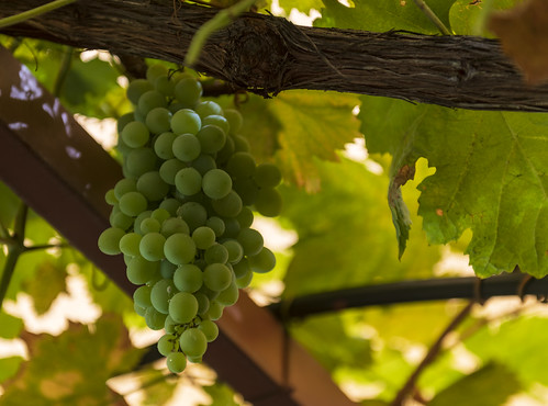 австралия australia перт perth кавершам caversham пейзаж landscape винодельня вино круиз cruise dmilokt виноград grape