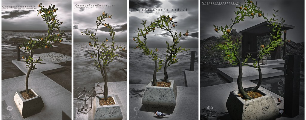 The Little Branch – Orange Tree Potted (4 Versions)