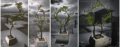 The Little Branch - Orange Tree Potted (4 Versions)