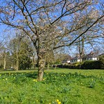 Some Spring colour in Haslam Park, Preston