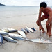Anse à la Mouche : le partage de la pêche