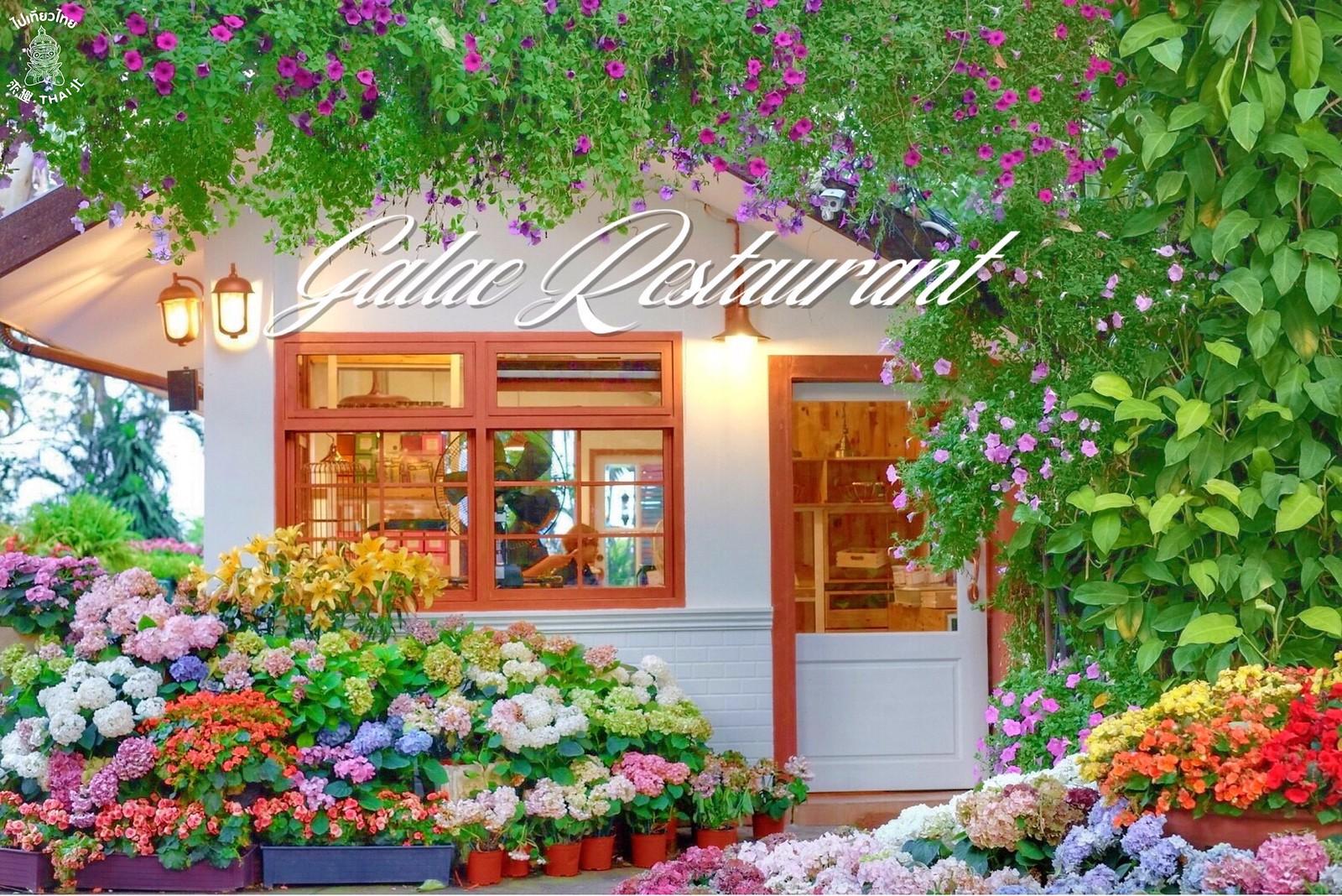 素貼山下巨美的花園餐廳ห้องอาหารอกาแล Galae Restaurant