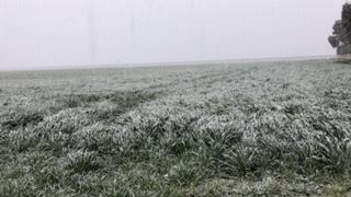 gelo e danni in agricoltura