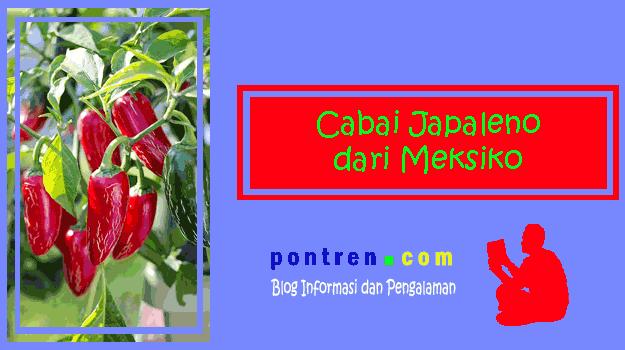cabai-japaleno-meksiko