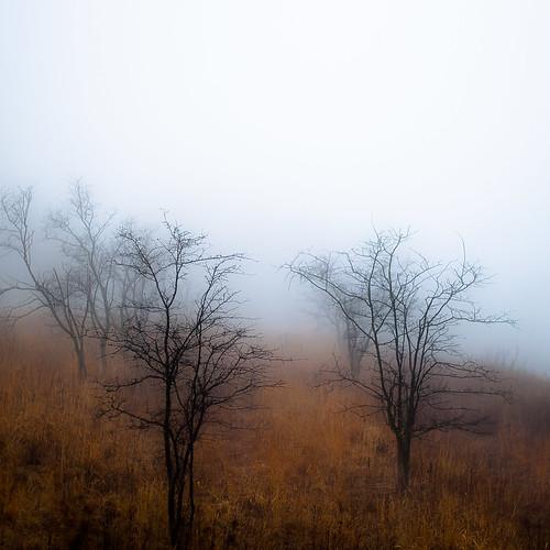 d5000 dof fortsheridanforestpreserve nikon abstract blur depthoffield fog foggy landscape mist misty natural noahbw prairie quiet sky square still stillness trees winter