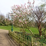 Bit of Spring colour at Avenham Park, Preston