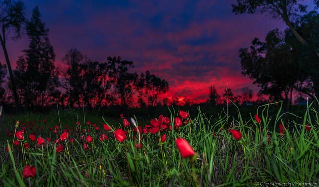 Reddish evening
