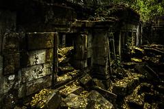 B5D_6375  Lost In The Jungle