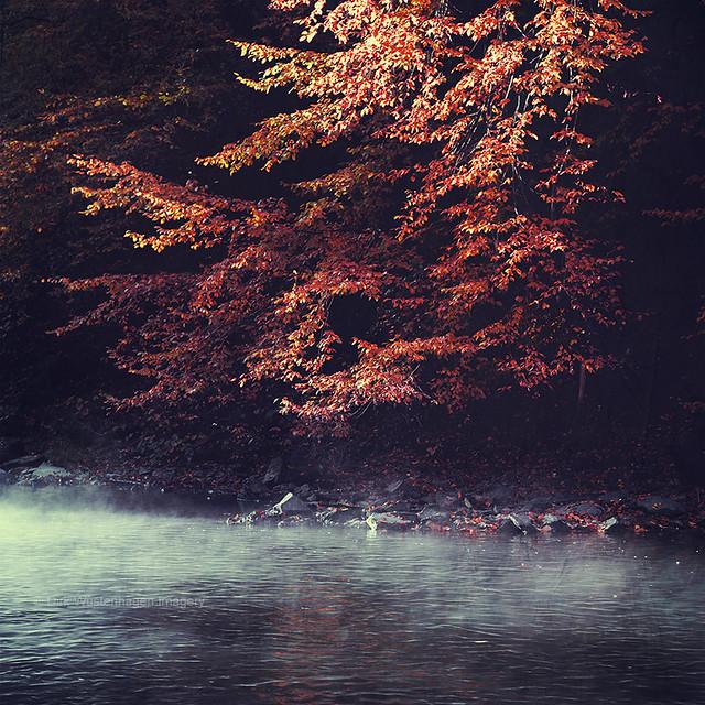 river mornings