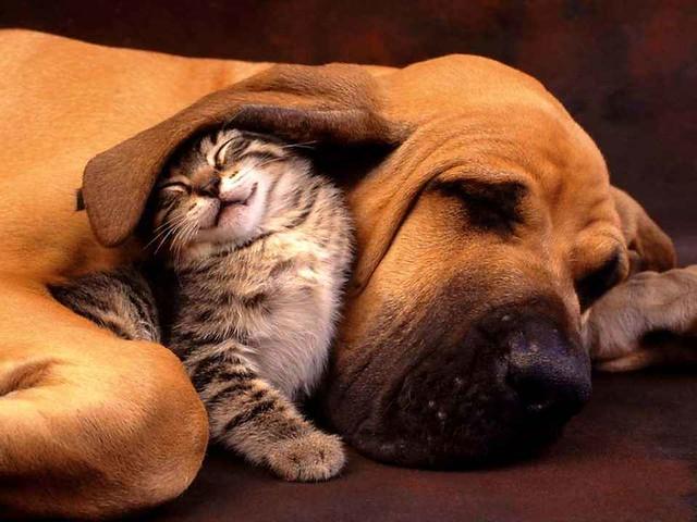 Cani e gatti posso trasmettere o farsi trasmettere il Coronavirus? Cosa dicono esperti