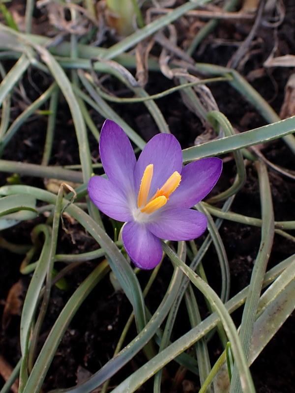 Le début du printemps 2020 chez Cloo 49697769418_5af101b800_c