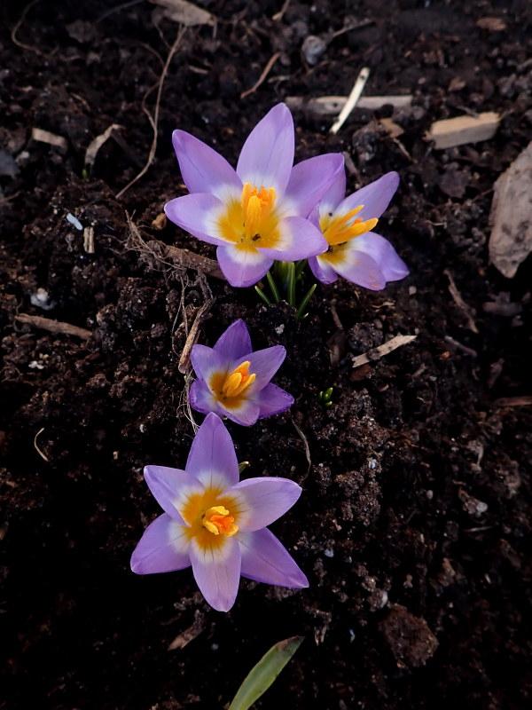 Le début du printemps 2020 chez Cloo 49698300836_a2274d4d5c_c