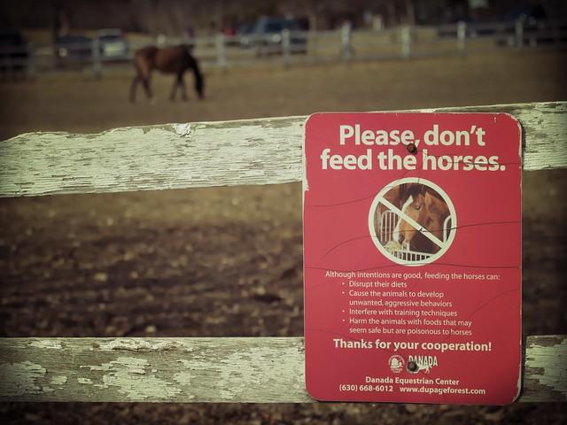 Horse, Danada Forest Preserve. 41 (EOS)