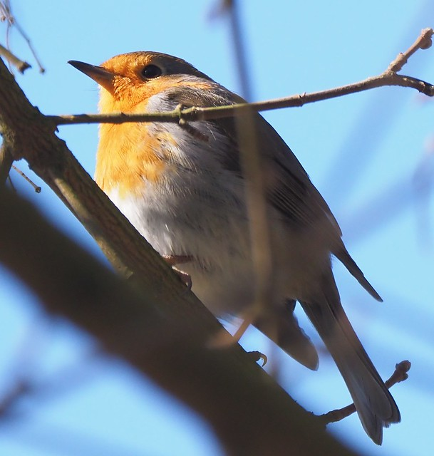 Bird in the Fasanerie Park in Groß-Gerau, Germany