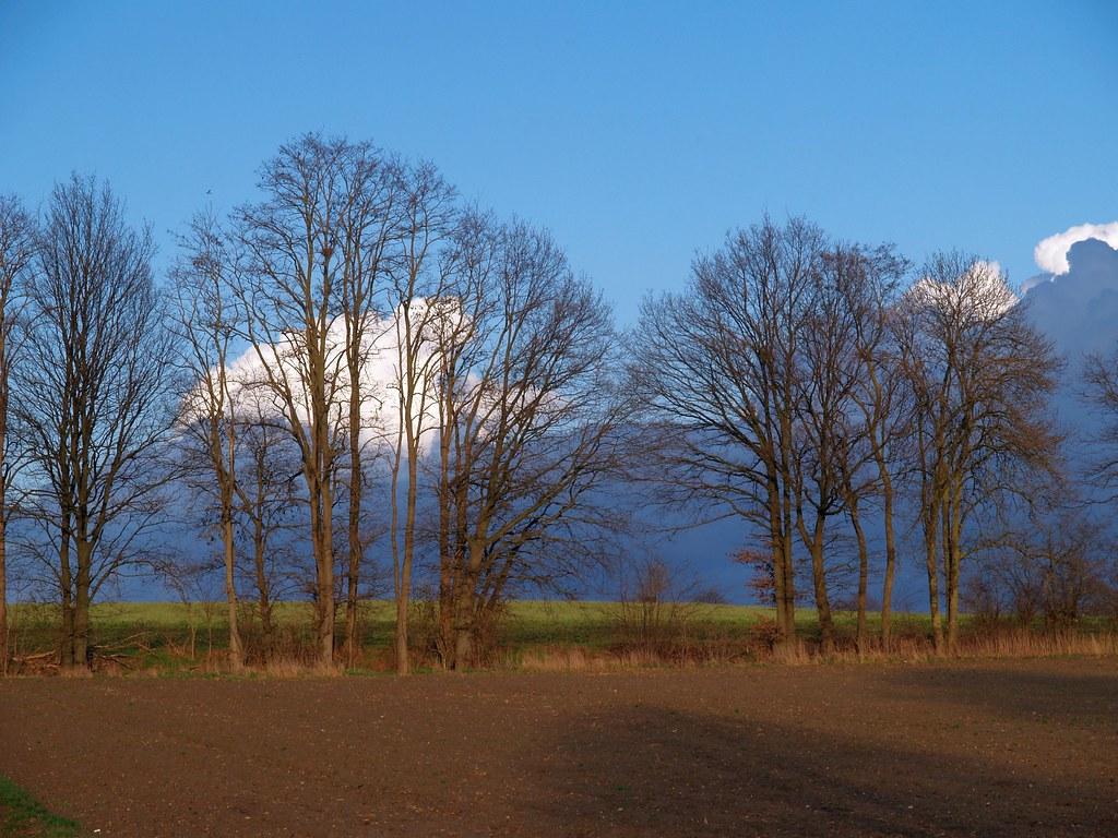 Nackte Bäume