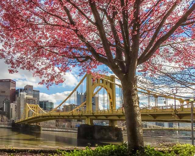 Pittsburgh Blossoming