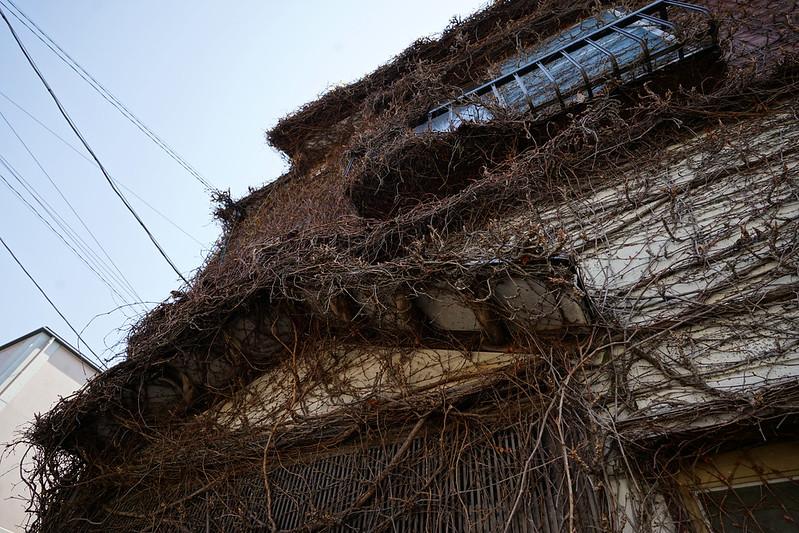 81東京いい道しぶい道池上道ぞいの蔦の絡まる家