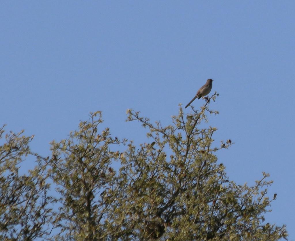 Backyard Birdwatcher