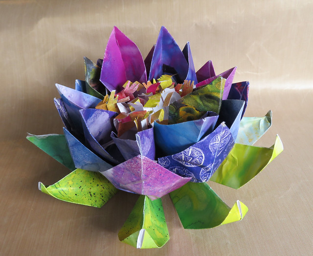 Lotus Blossom of Many Colors