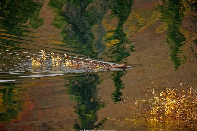 Busy Beaver Pond