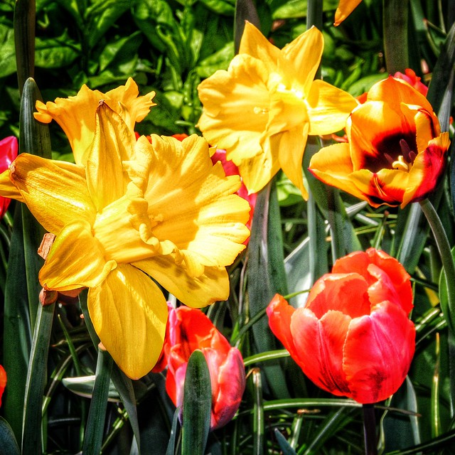 Toronto Ontario ~ Canada ~  Edwards Botanical Gardens  ~ Flower Cluster