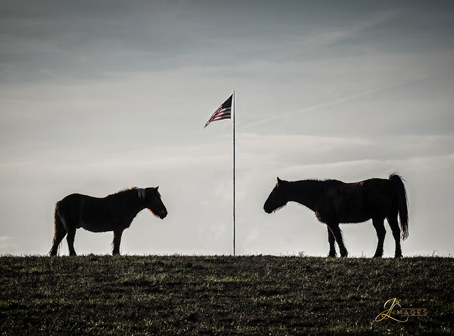 Horses and the Flag