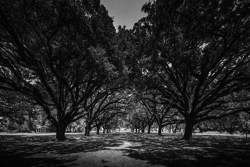 centralunit fortbendcounty houston sugarland texas texashistoricalcommission usa unitedstatesofamerica blackandwhite historic image landscape oaktrees old photo photograph prison trees f63 mabrycampbell june 2017 june82017 20170608campbellh6a4965 17mm ¹⁄₁₂₅sec iso100 tse17mmf4l fav10