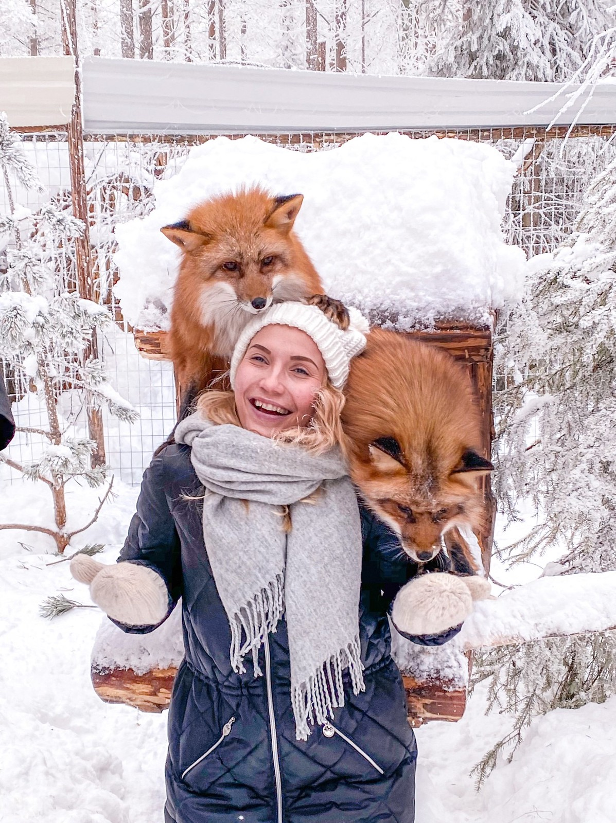 Foxes Levi Husky Park