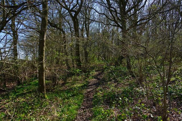 A woodland walk. A spring trail through the trees.