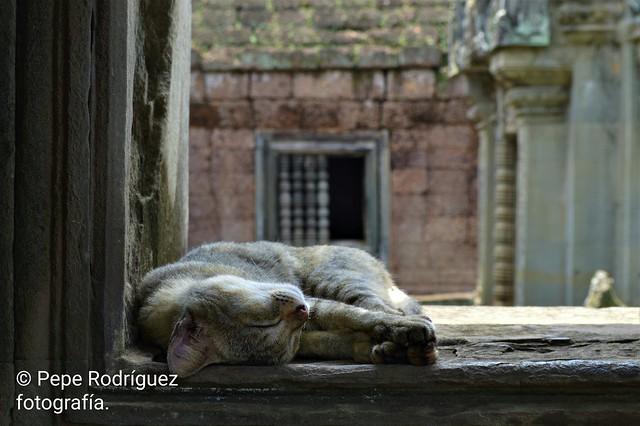 Sueño tranquilo en Angkor Wat