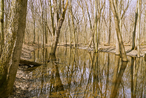trees floodplain reflections breathtakinglandscapes