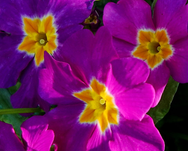3 Colourful spring flora