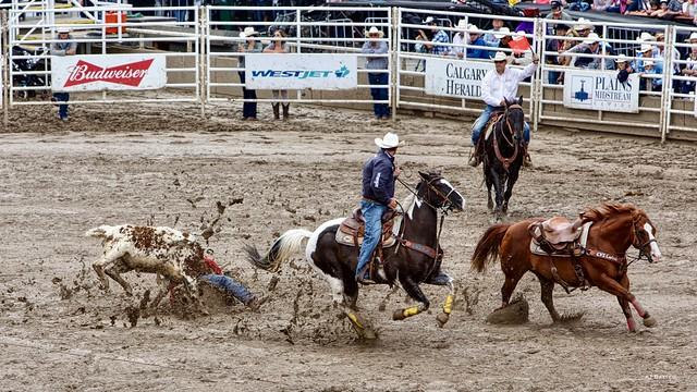 Steer Wrestling, Calgary Stampede Rodeo