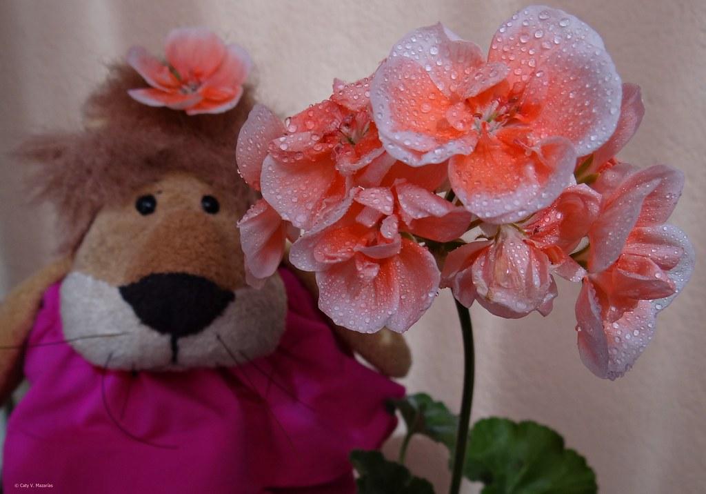 Soy Leoncia,  ¿os gusta mi flor? .