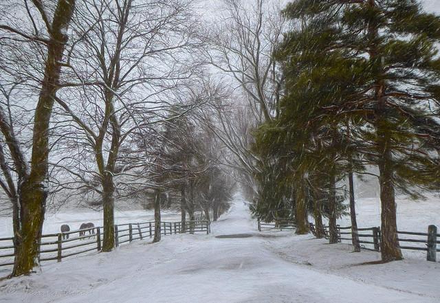 Spring Snow Storm in Ontario