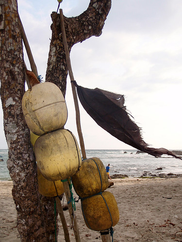 Buoys hanging from a tree at San Juanillo Beach in Ostional, Costa Rica